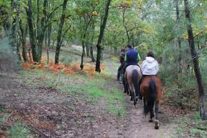Ruta a caballo por bosques de robles